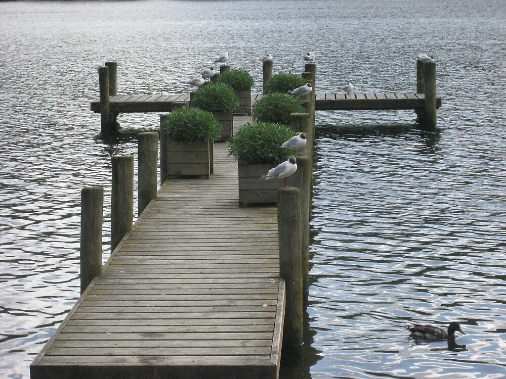 Birds on the Jetty by shelagh1312