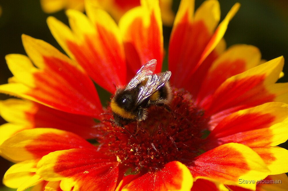 Hive of industry by Steve plowman
