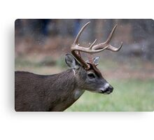 Snow Falling On A White-Tailed Deer Metal Print