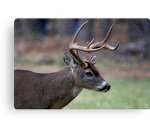 Snow Falling On A White-Tailed Deer Canvas Print