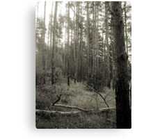 Vintage Photo of Pine Forest 2 Canvas Print