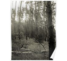 Vintage Photo of Pine Forest 2 Poster