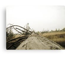 Vintage Photo of Pine Forest 3 Canvas Print