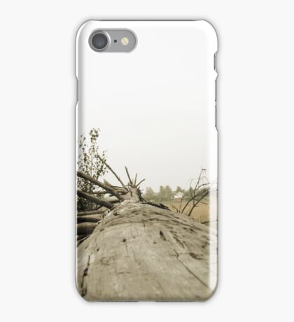 Vintage Photo of Pine Forest 3 iPhone Case/Skin