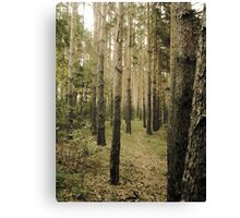 Vintage Photo of Pine Forest 5 Canvas Print