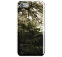 Vintage Photo of Pine Forest 6 iPhone Case/Skin