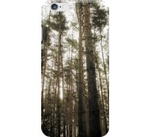 Vintage Photo of Pine Forest 7 iPhone Case/Skin