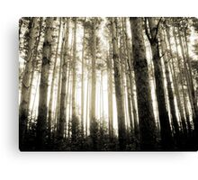 Vintage Photo of Pine Forest 8 Canvas Print
