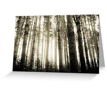 Vintage Photo of Pine Forest 8 Greeting Card