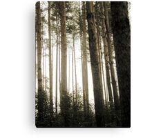 Vintage Photo of Pine Forest 9 Canvas Print