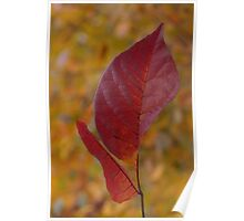 The Warm Glow of Fall - a Vertical View Poster
