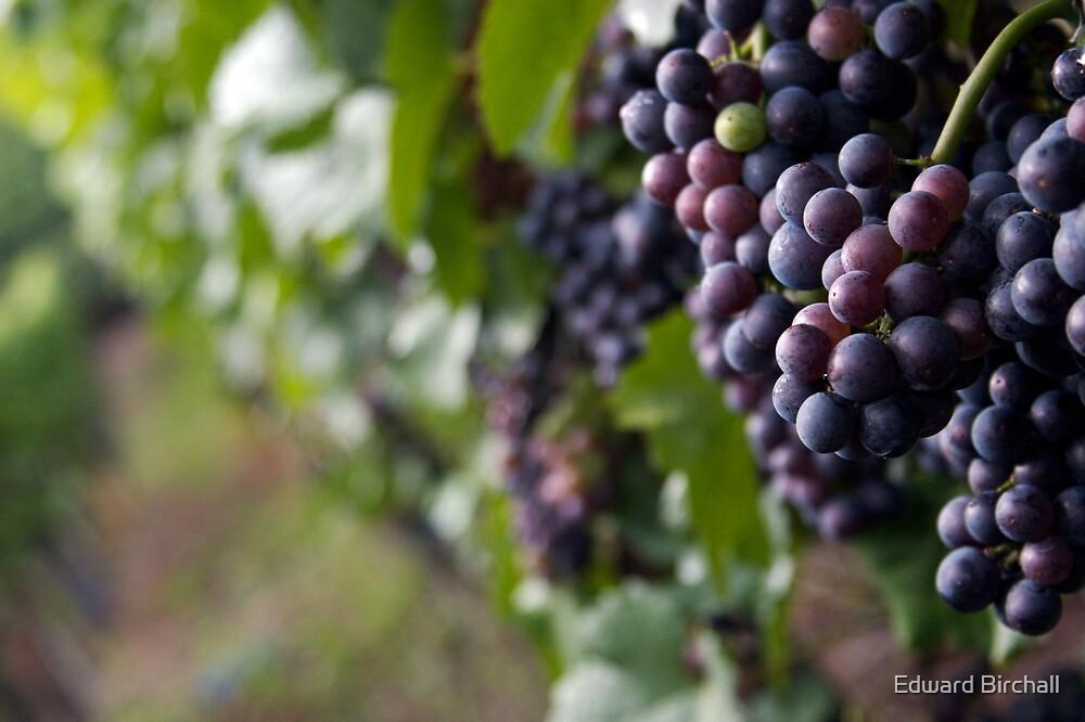 Wine Grapes by Edward Birchall