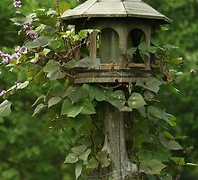 Birdhouse Vine by Lori Jolly
