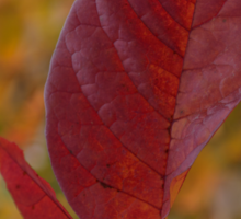 The Warm Glow of Fall - a Vertical View Sticker
