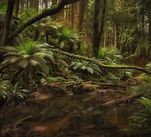 Redwoods, Otways, Victoria by Margaret Metcalfe