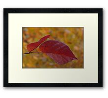The Warm Glow of Fall - a Horizontal View Framed Print
