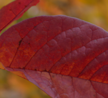 The Warm Glow of Fall - a Horizontal View Sticker