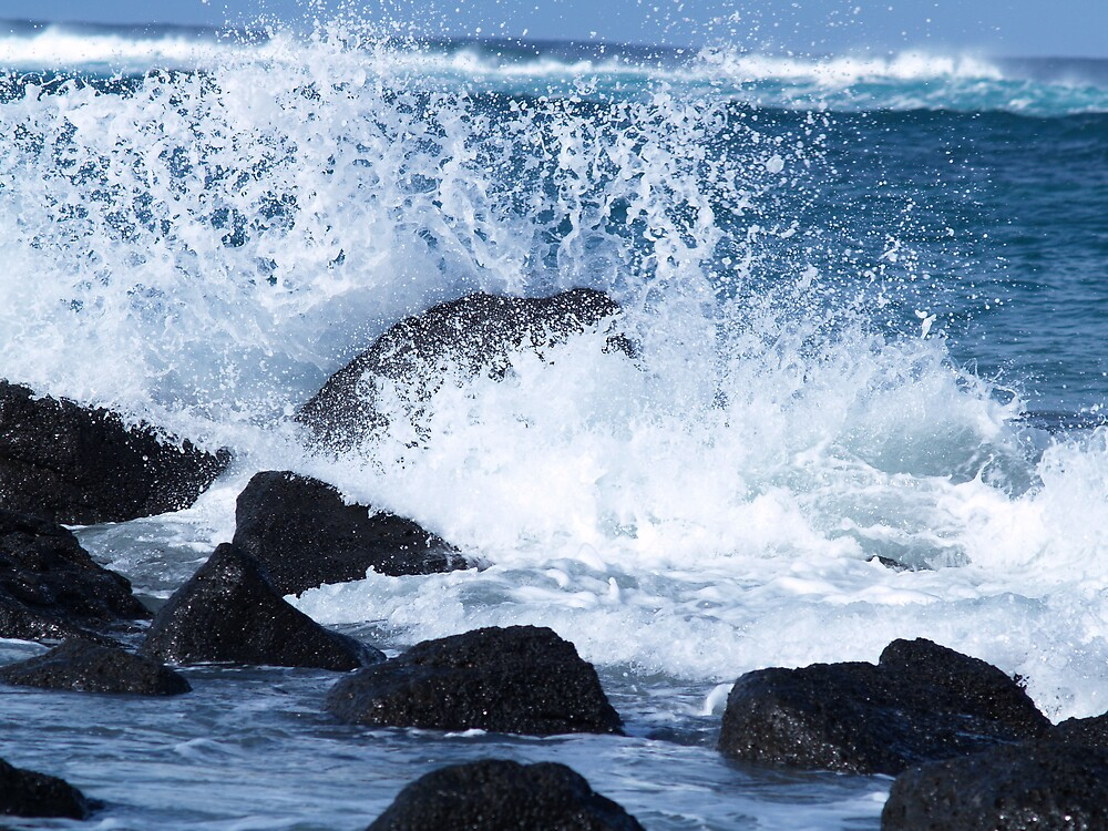 Rocks at Port Fairy by wildflowers