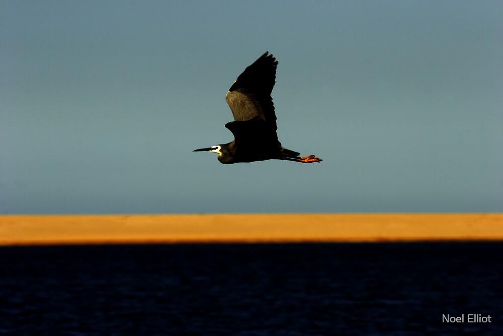 Bird # 8 by Noel Elliot