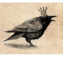 Crow in crown Photographic Print