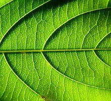 Leaf by katietomato