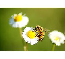 Lone Bee Photographic Print