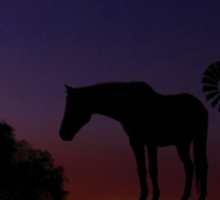 Outback Horse Sticker