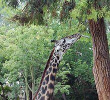 The Tree Licker by llurdh