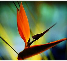 Bird of Paradise by katietomato