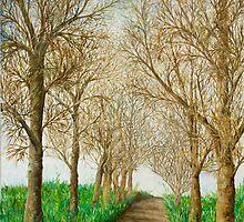 Avenue of trees by Abir Saleh