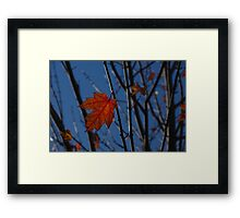 Almost Over - The Last Red Maple Leaves Framed Print