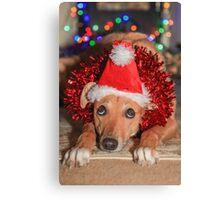 Funny Dog Wearing A Santa Hat At Christmas Canvas Print