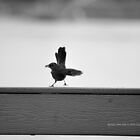 Little Bird Is Taking Off | Quogue, New York  by © Sophie W. Smith