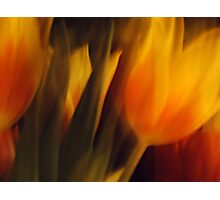 Flowers of Fire Photographic Print