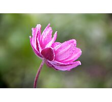 The pink tutu Photographic Print