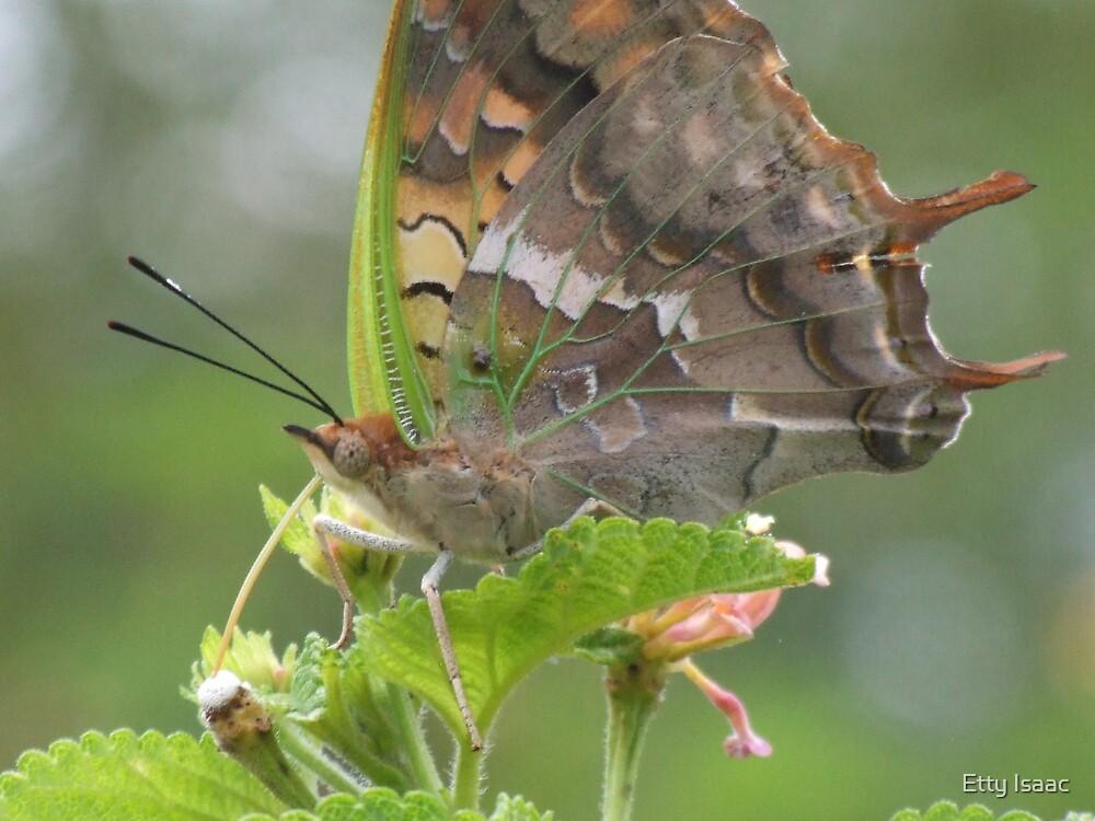 butterfly by Etty Baruch
