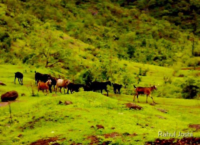 Animal's haven by Rahul Joshi