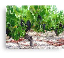 Vines Canvas Print