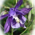 Passion Purple by Martha Medford