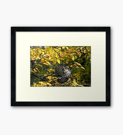 Hornet's Nest II Framed Print