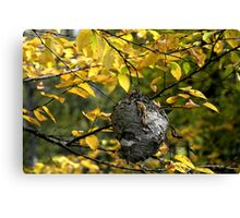 Hornet's Nest II Canvas Print