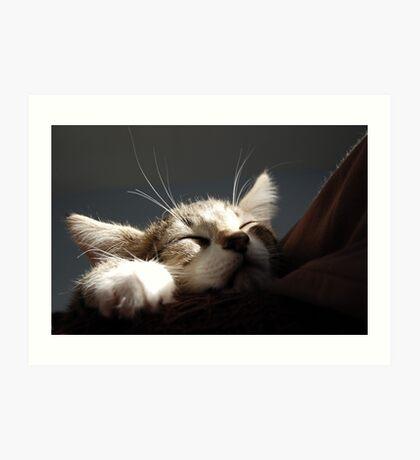 Kitten Sleeping Art Print