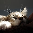 Kitten Sleeping by dozzie