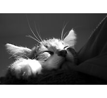 Kitten Sleeping BW Photographic Print