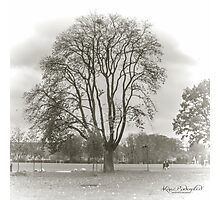 On a Grey November day Photographic Print