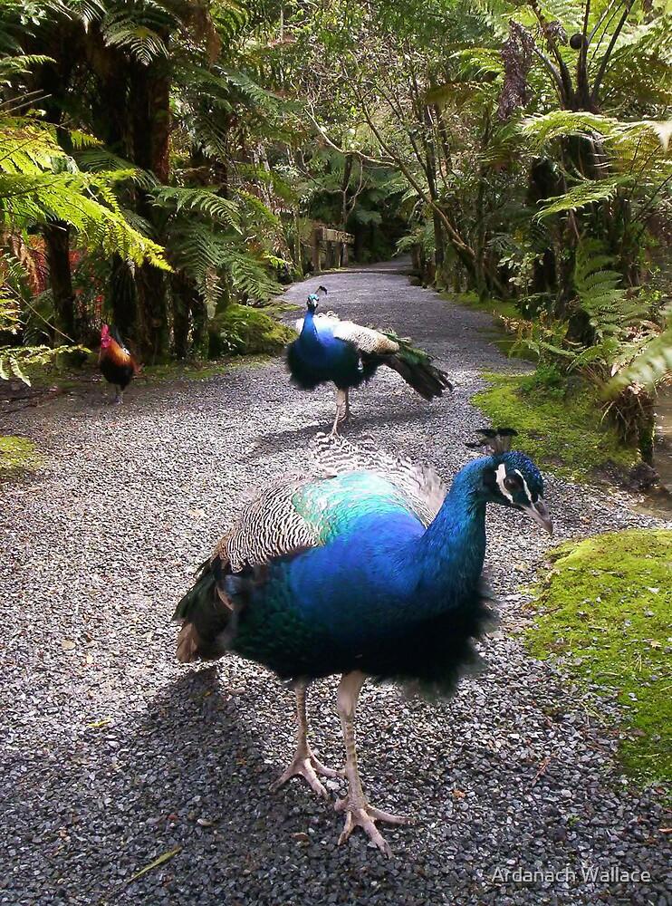 Peacocks on pebbles by Ardanach Wallace
