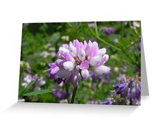 Purple Crown Vetch Greeting Card