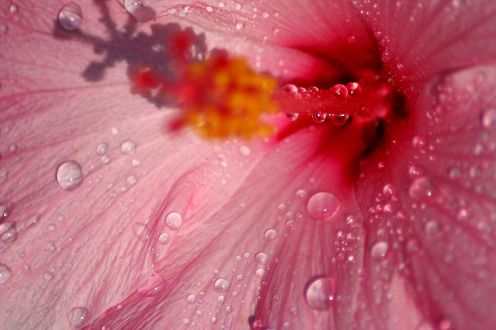 Pink Droplets by Taylor Jury