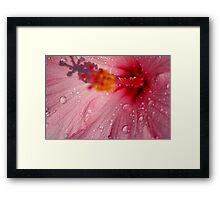 Pink Droplets Framed Print