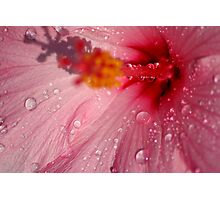 Pink Droplets Photographic Print